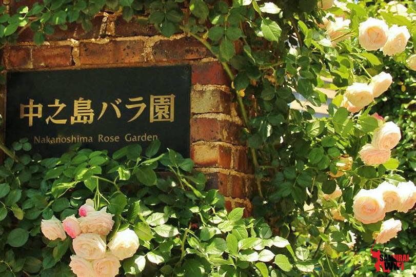 Vườn hồng Nakanoshima