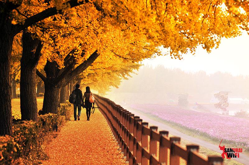 Đảo Nammi Hàn Quốc vào thu