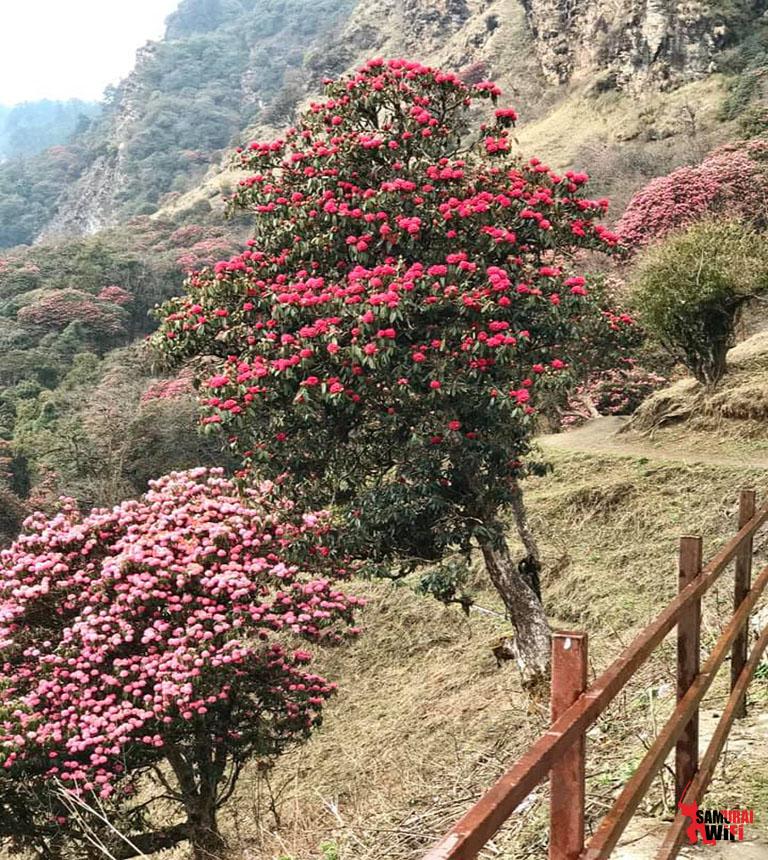 WIFI DU LỊCH NEPAL SAMURAI 5 ĐIỀU BẠN CHƯA BIẾT NƠI ĐÂY